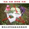 重庆花椒筐厂家直销_鲜花椒塑料筐_大号可装40斤_白色水果筐