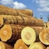 木材进进口业务代理_、报关及清关国际物流